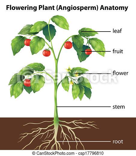 plante, parties - csp17796810