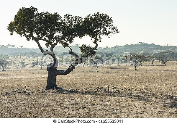portugal., arbres, bouchon - csp55533041