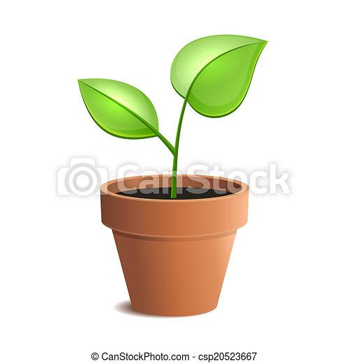 pot usine, jeune, isolé, vecteur, vert, backgrounds., blanc - csp20523667
