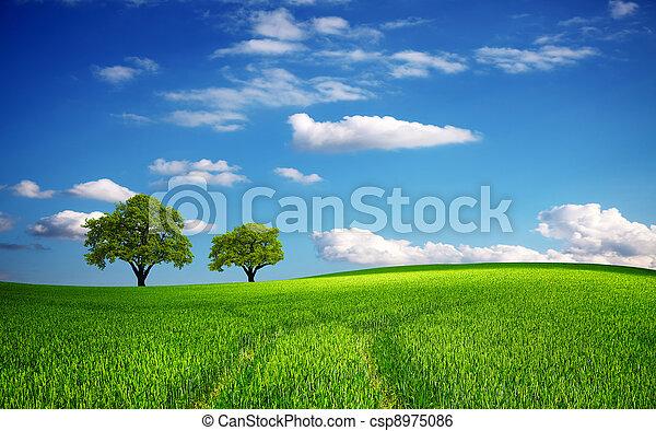 printemps, champ vert - csp8975086