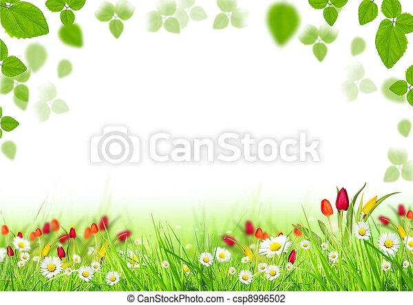 printemps, fond - csp8996502