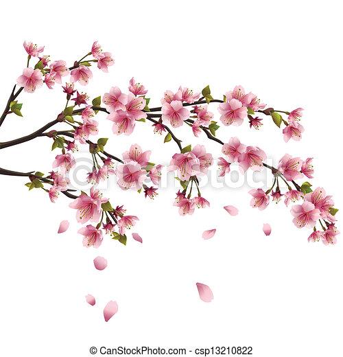 réaliste, fleur, cerise, voler, -, japonaise, arbre, isolé, pétales, sakura, fond, blanc - csp13210822