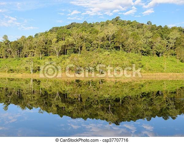 réflexion arbre, pin, lac - csp37707716