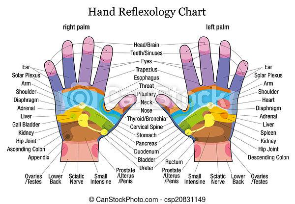 reflexology, main, description, diagramme - csp20831149