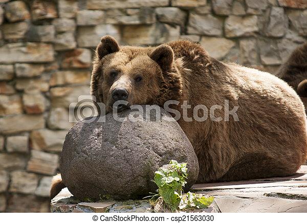 reposer, ours - csp21563030