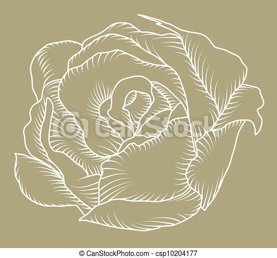 rose, croquis - csp10204177
