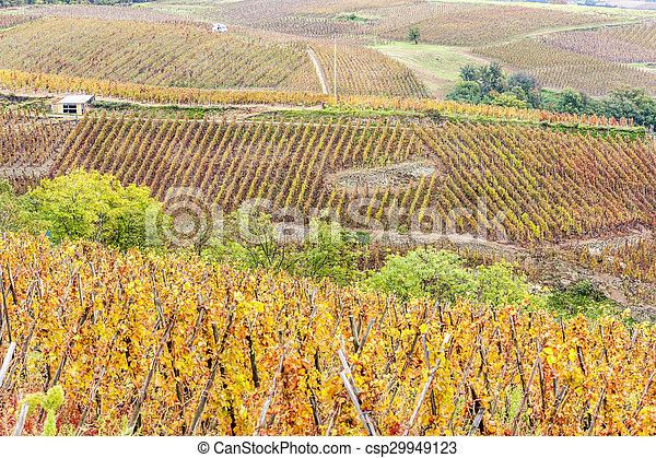 rotie, cru, rhône-alpes, france, vignoble, cote, grandiose - csp29949123