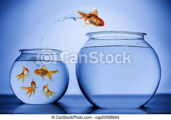 sauter, heureusement, fish - csp20598694