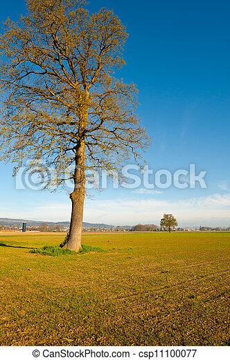 solitaire, arbre - csp11100077