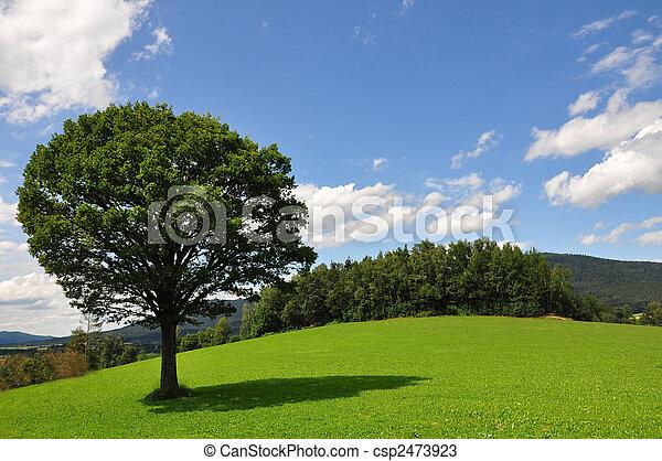 solitaire, arbre - csp2473923