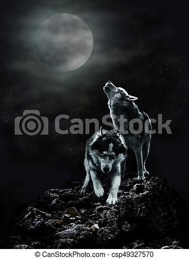 sombre, paire, loups, nuit, lune - csp49327570