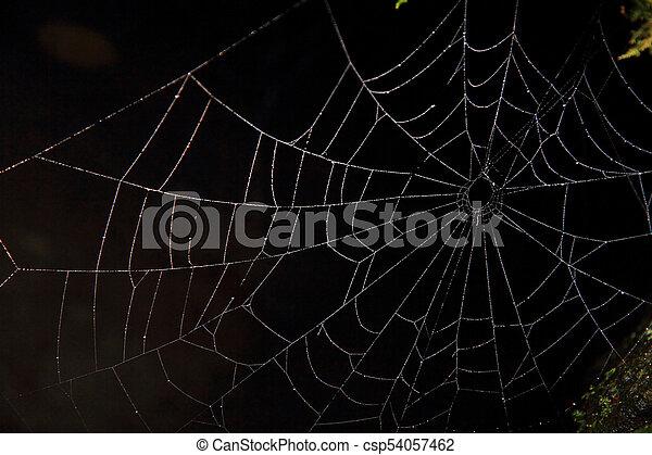 sombre, toile, araignés - csp54057462