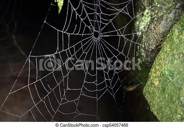 sombre, toile, araignés - csp54057466