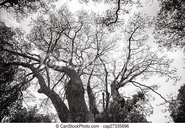 surgelé, arbre, résumé, branches - csp27335696