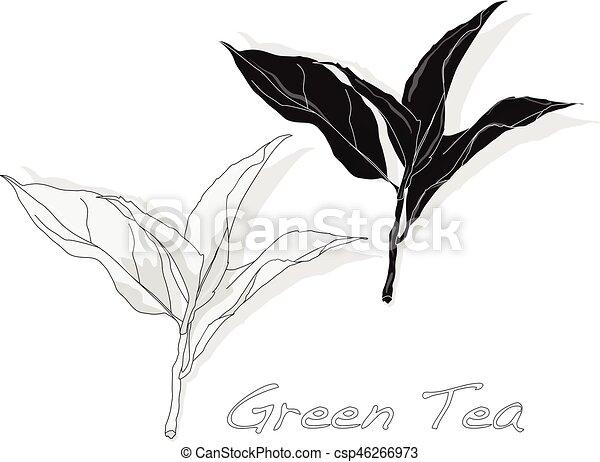 thé, vecteur, feuille, vert - csp46266973