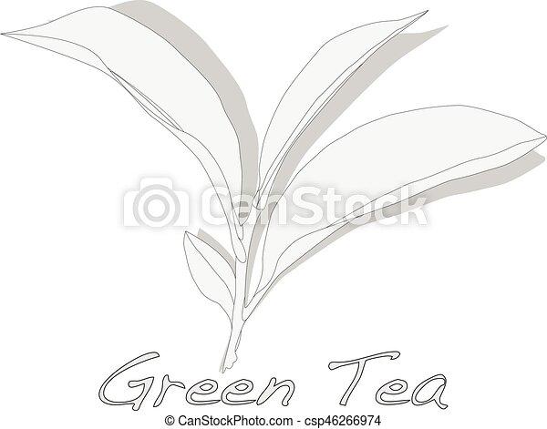 thé, vecteur, feuille, vert - csp46266974