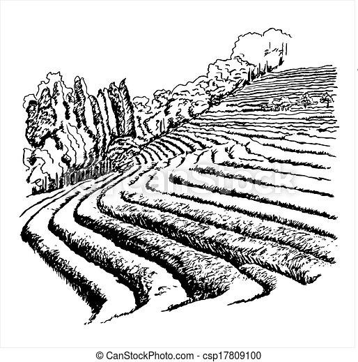 thé, vecteur, -, plantations, illustration - csp17809100