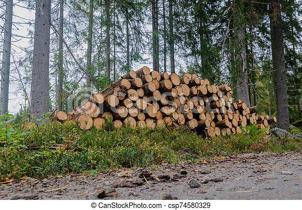 timberstack, côté route, impeccable, arbres - csp74580329