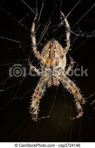 toile araignée - csp3724146