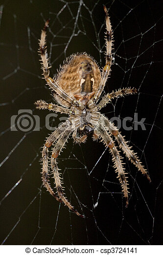 toile araignée - csp3724141