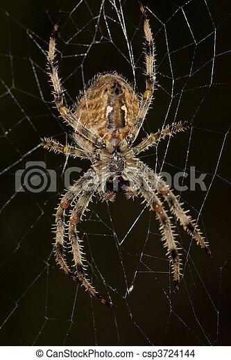 toile araignée - csp3724144