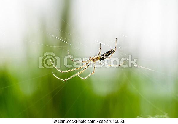 toile, araignés - csp27815063