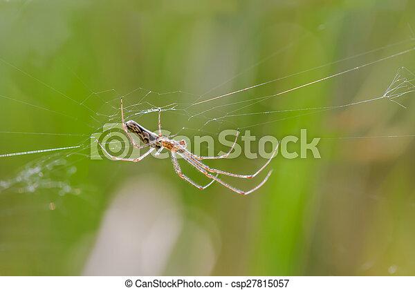 toile, araignés - csp27815057