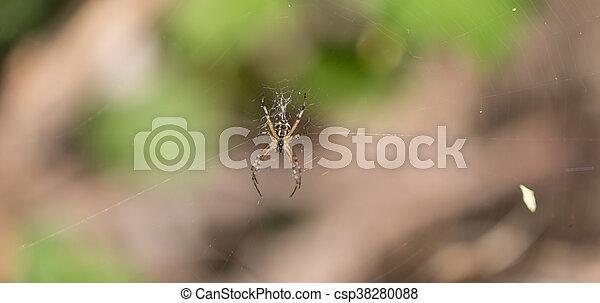 toile, araignés - csp38280088