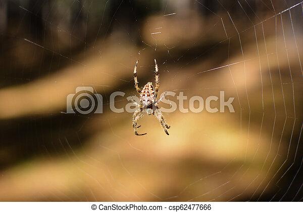 toile, cob, sien, araignés, environnement - csp62477666