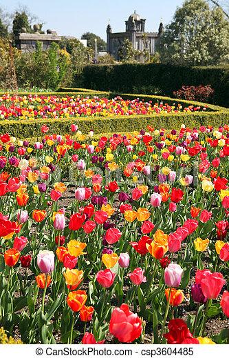 tulipes, château, arundel, jardin - csp3604485