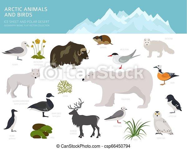 usines, polaire, oiseaux, biome., écosystème, arctique, map., animaux, glace, désert, infographic, conception, feuille, mondiale, terrestre, fish - csp66450794