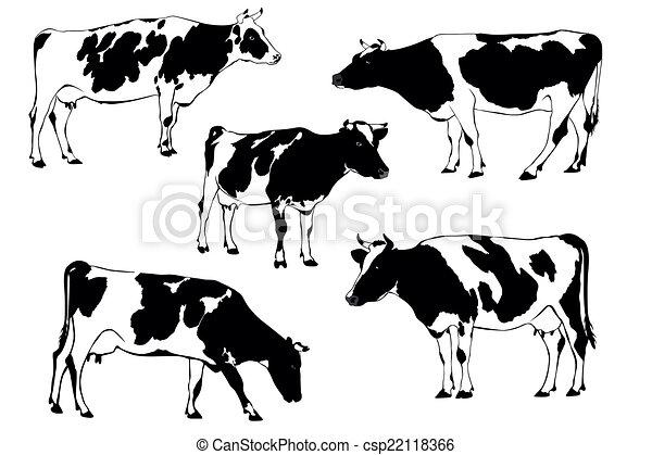 vache - csp22118366