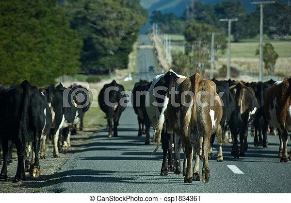 vaches, pays, marche, route - csp1834361