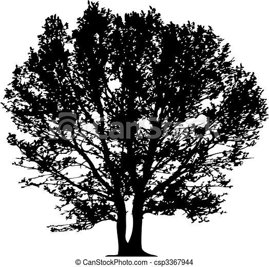 vecteur, arbre - csp3367944