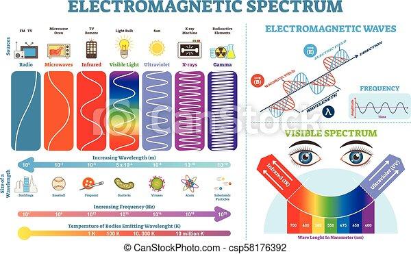 vecteur, information, entiers, elements., temperature., électromagnétique, collection, spectre, illustration, vague, diagramme, infographic, fréquence, structure, lengths, physique, scheme. - csp58176392