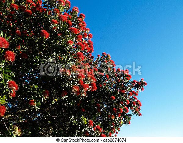 zélande, nouveau, arbre, pohutukawa, flower. - csp2874674